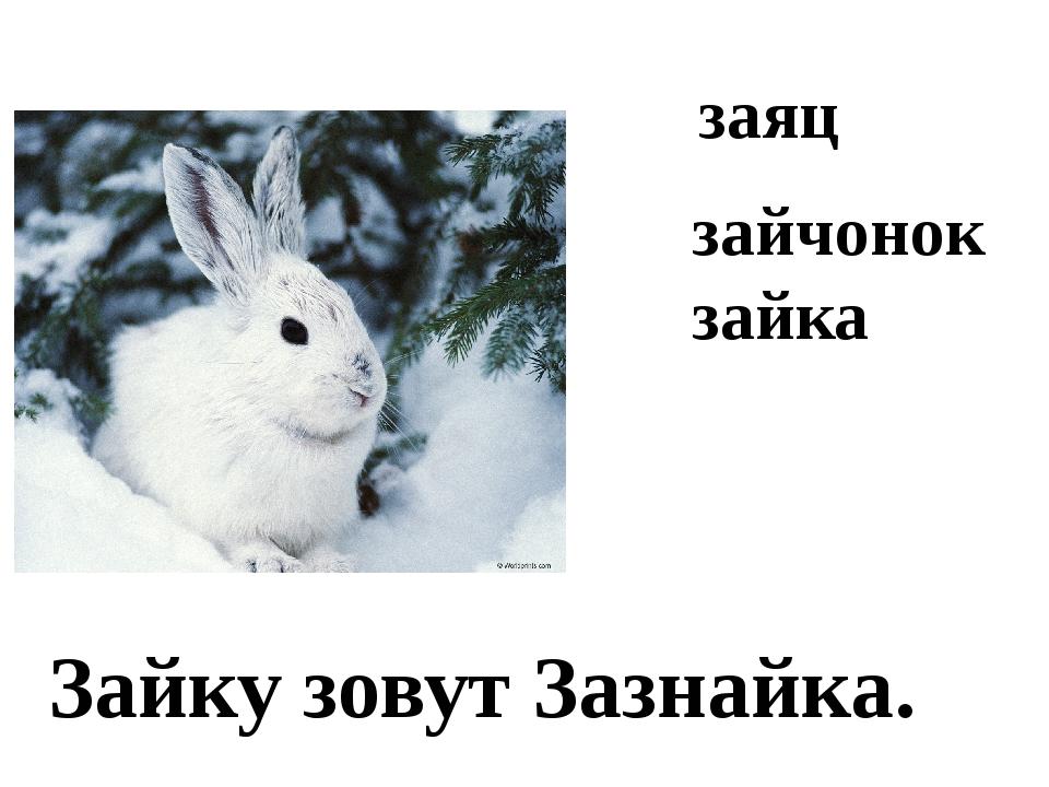 заяц Зайку зовут Зазнайка. зайчонок зайка