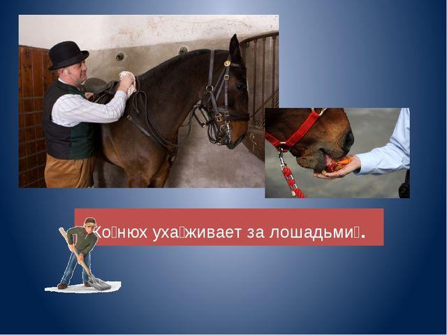 Ко̀нюх уха̀живает за лошадьмѝ.