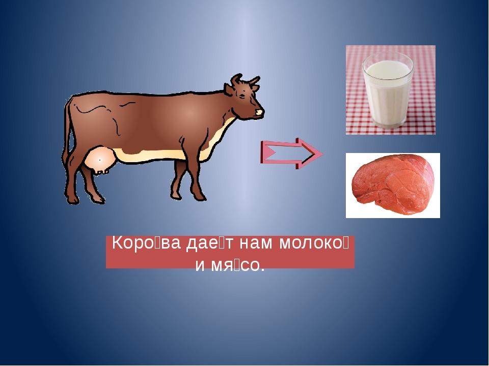 Коро̀ва даѐт нам молоко̀ и мя̀со.