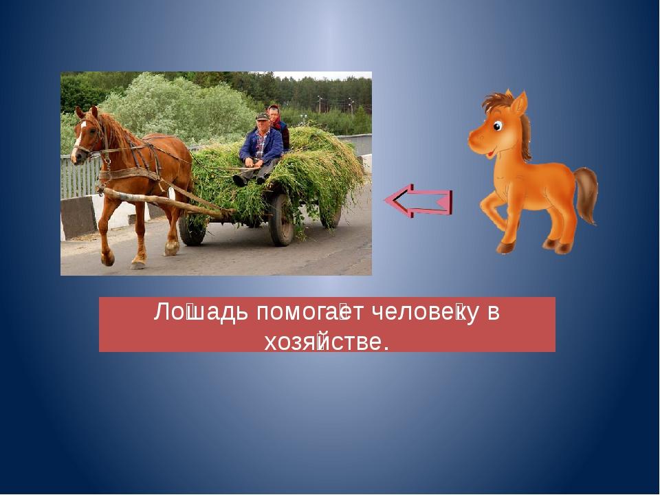 прогнозам копия картинка польза лошади для человека для вашего мужа