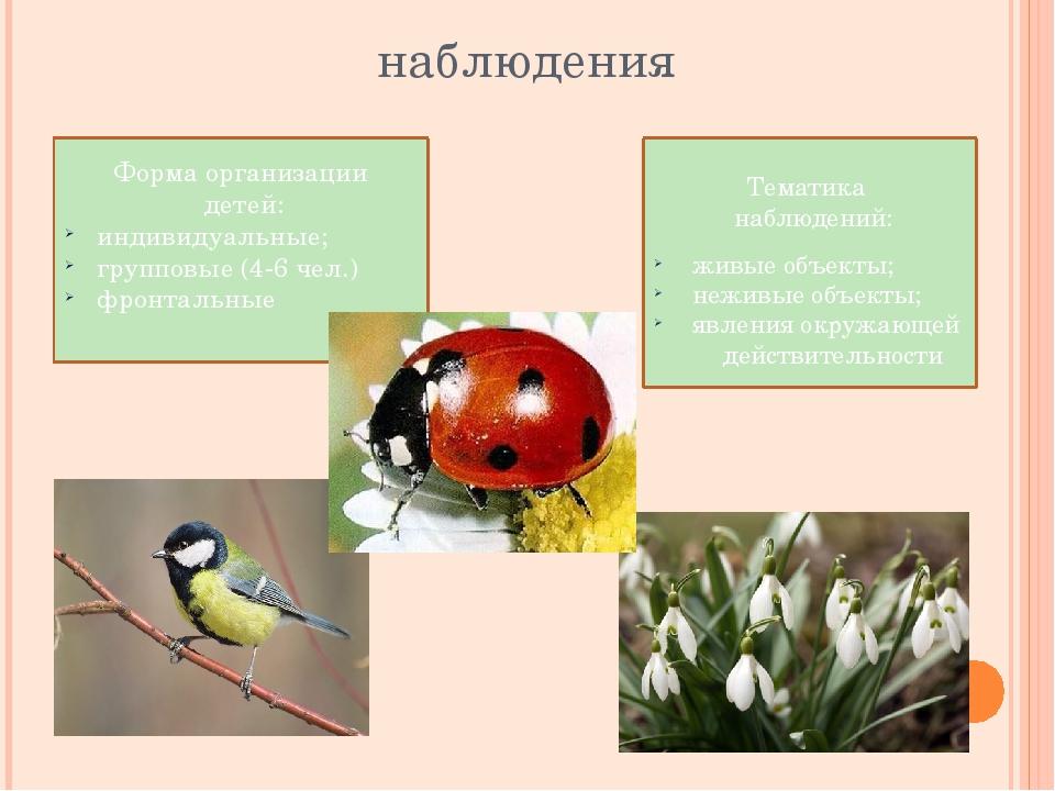 наблюдения Тематика наблюдений: живые объекты; неживые объекты; явления окруж...