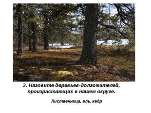2. Назовите деревьев-долгожителей, произрастающих в нашем округе. Лиственница