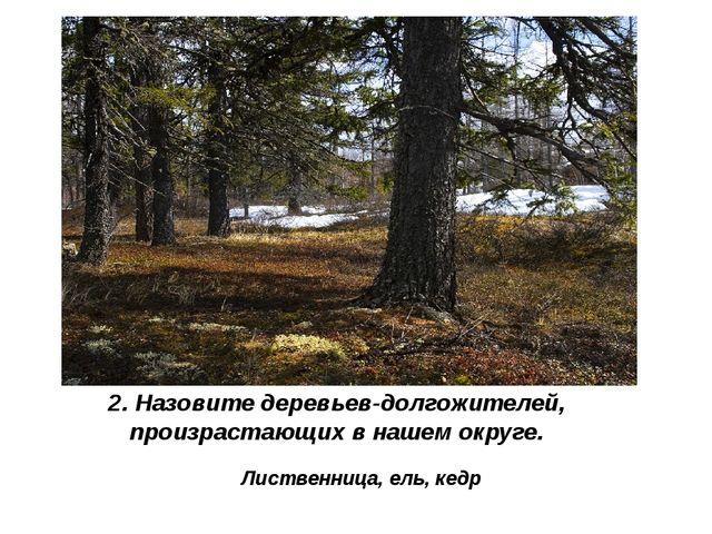 2. Назовите деревьев-долгожителей, произрастающих в нашем округе. Лиственница...