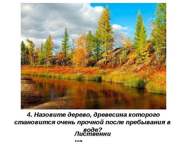 Лиственница 4. Назовите дерево, древесина которого становится очень прочной п...