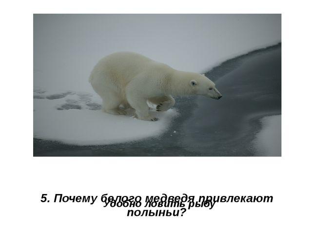 5. Почему белого медведя привлекают полыньи? Удобно ловить рыбу