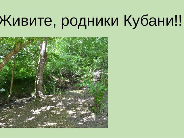 Живите, родники Кубани!!!
