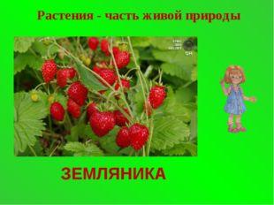 ЗЕМЛЯНИКА Растения - часть живой природы