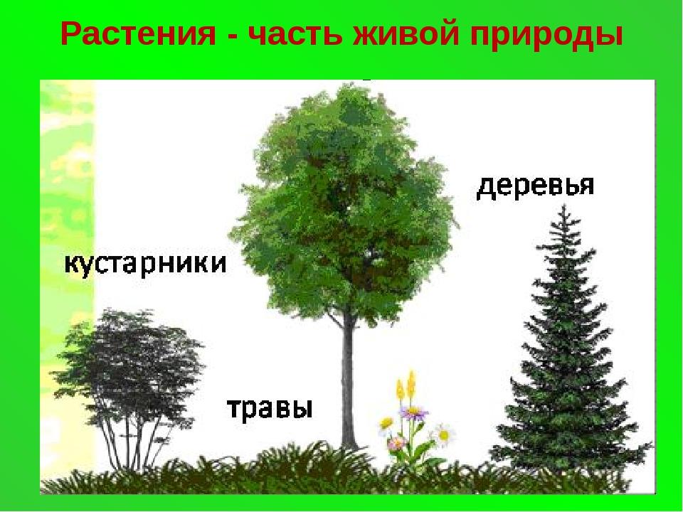 Растения - часть живой природы