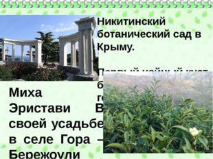 Никитинский ботанический сад в Крыму. Первый чайный куст был высажен в 1817 г