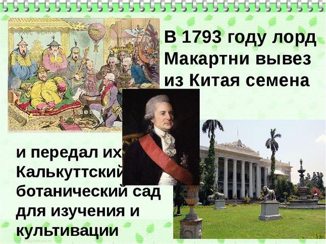 В 1793 году лорд Макартни вывез из Китая семена чая и передал их в Калькуттск...