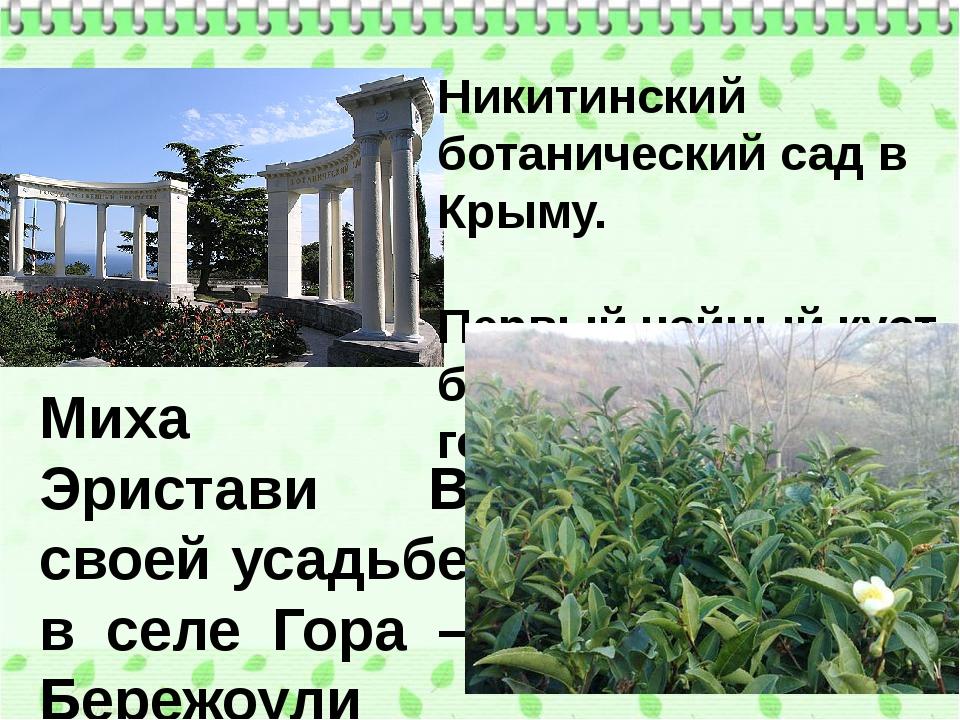 Никитинский ботанический сад в Крыму. Первый чайный куст был высажен в 1817 г...
