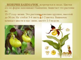 ВЕНЕРИН БАШМАЧОК встречается в лесах. Цветки его по форме напоминают башмачк