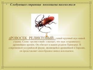 дРОВОСЕК РЕЛИКТОВЫЙ- самый крупный жук нашей страны. Слово «реликтовый» означ