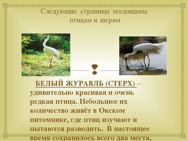 Следующие страницы посвящены птицам и зверям БЕЛЫЙ ЖУРАВЛЬ (СТЕРХ) – удивител...