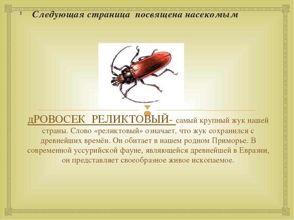 дРОВОСЕК РЕЛИКТОВЫЙ- самый крупный жук нашей страны. Слово «реликтовый» означ...