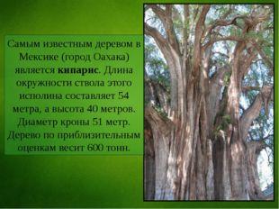 Самым известным деревом в Мексике (город Оахака) является кипарис. Длина окру