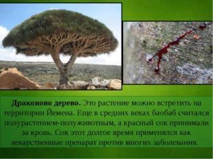 Драконово дерево. Это растение можно встретить на территории Йемена. Еще в ср