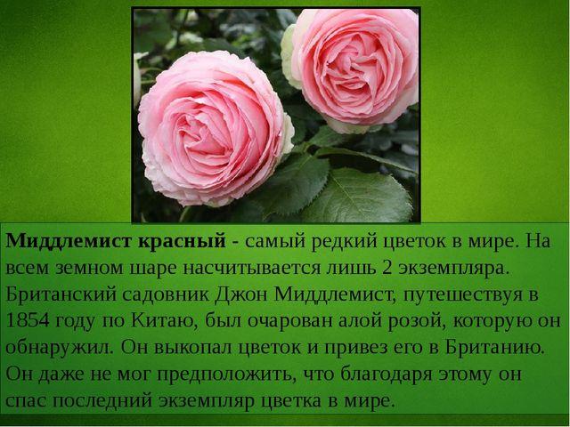 Миддлемист красный - самый редкий цветок в мире. На всем земном шаре насчитыв...