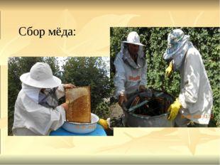 Сбор мёда:
