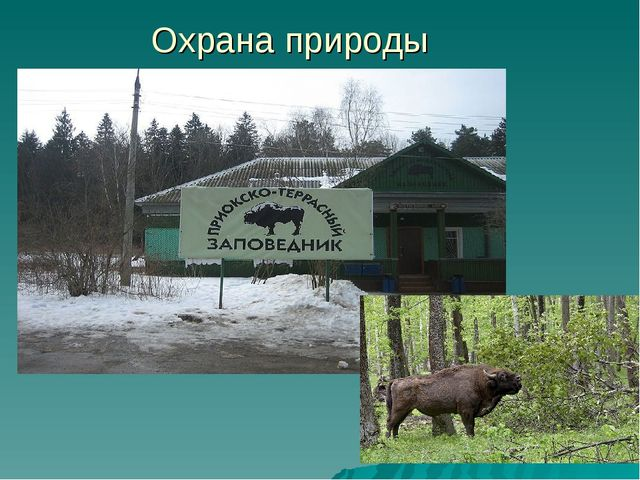 Охрана природы