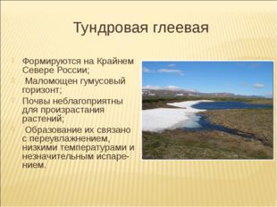 Тундровая глеевая Формируются на Крайнем Севере России; Маломощен гумусовый г