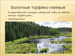 Болотные торфяно-глеевые В европейской и западно-сибирской тайге на заболо- ч