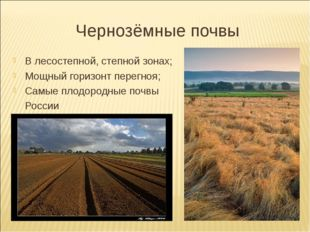 Чернозёмные почвы В лесостепной, степной зонах; Мощный горизонт перегноя; Сам