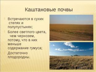 Каштановые почвы Встречаются в сухих степях и полупустынях; Более светлого цв
