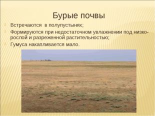 Бурые почвы Встречаются в полупустынях; Формируются при недостаточном увлажне