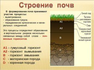 В формировании почв принимают участие процессы: выветривание; образование гу