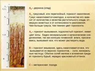 А0 – дернина (опад) А1 – гумусовый, или перегнойный, горизонт накопления. Гум