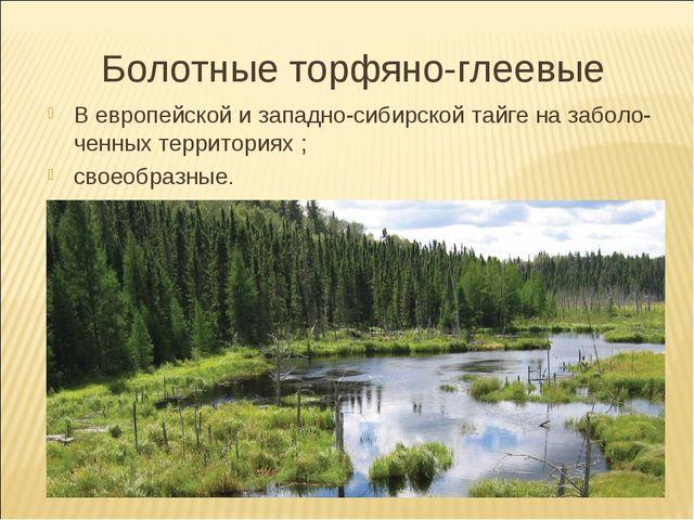 Болотные торфяно-глеевые В европейской и западно-сибирской тайге на заболо- ч...