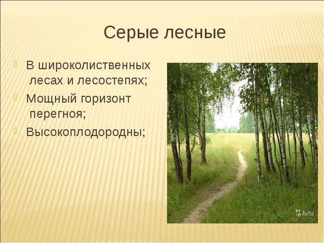 Серые лесные В широколиственных лесах и лесостепях; Мощный горизонт перегноя;...