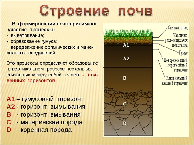 В формировании почв принимают участие процессы: выветривание; образование гу...