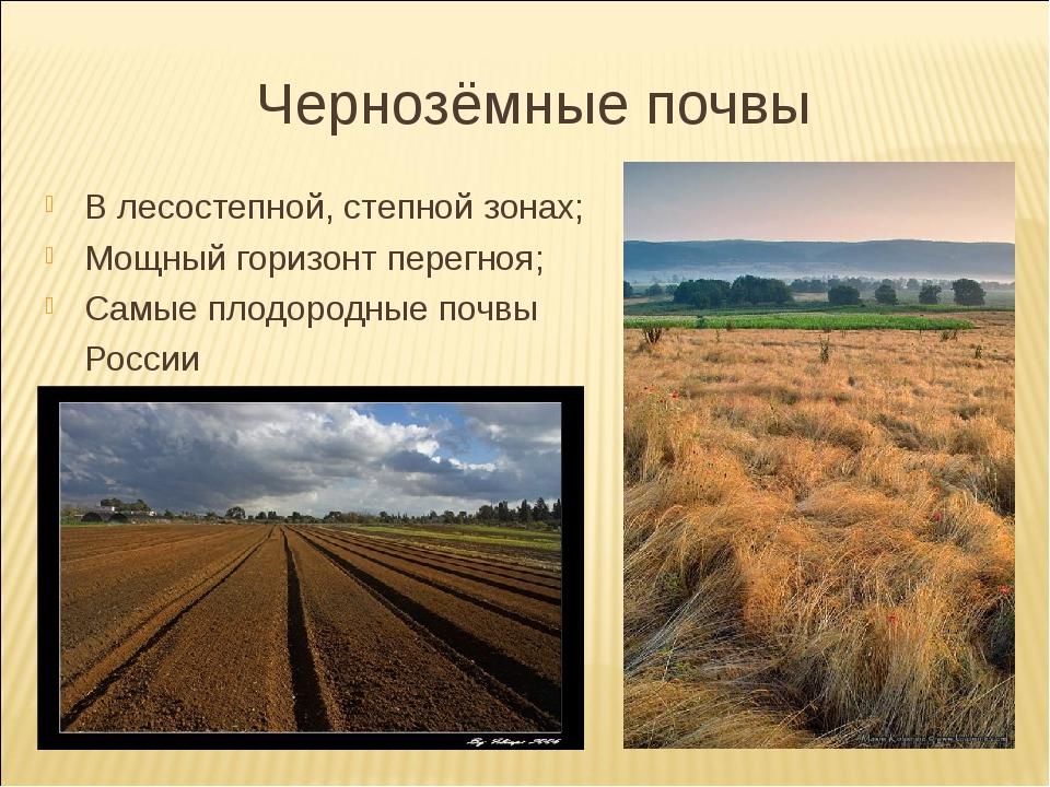 Чернозёмные почвы В лесостепной, степной зонах; Мощный горизонт перегноя; Сам...