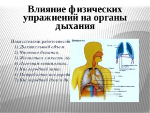 Показателями работоспособности органов дыхания являются:  1) Дыхательный об