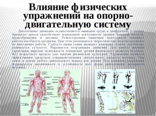 Дыхательные движения осуществляются мышцами груди и диафрагмой, а мышцы брюш