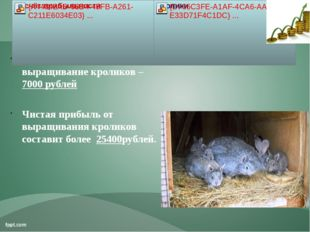 Расход за год на выращивание кроликов – 7000 рублей Чистая прибыль от выращив