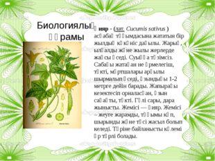 Биологиялық құрамы Қияр - (лат.Cucumis sativus) асқабақ тұқымдасына жататын