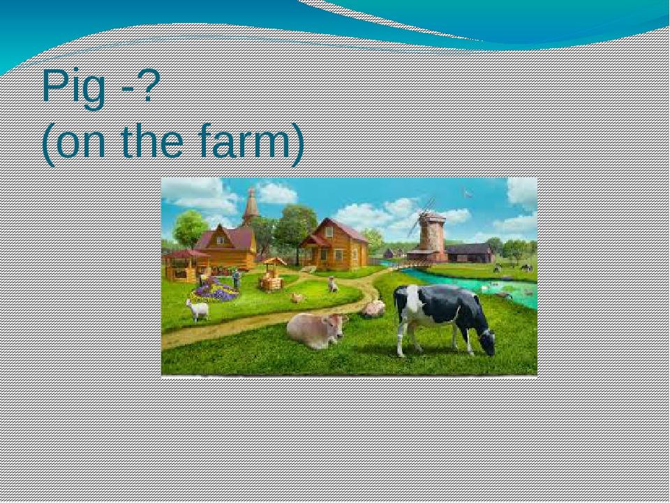 Pig -? (on the farm)