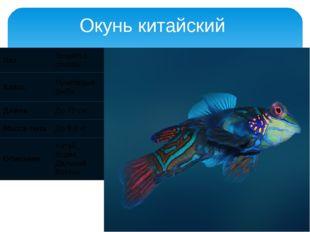 Окунь китайский Лат Siniperca chuatsi Класс Лучепёрые рыбы Длина До 70 см Мас