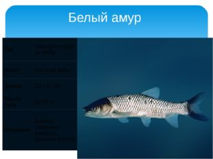 Белый амур Лат Ctenopharyngodon idella Класс Костные рыбы Длина До 120 см Мас