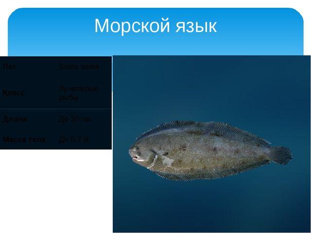 Морской язык Лат Solea solea Класс Лучепёрые рыбы Длина До 30 см Масса тела Д...