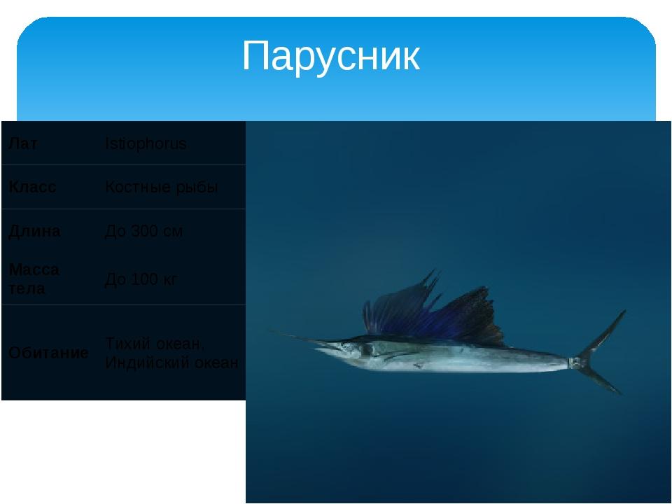 Парусник Лат Istiophorus Класс Костные рыбы Длина До 300 см Масса тела До 100...