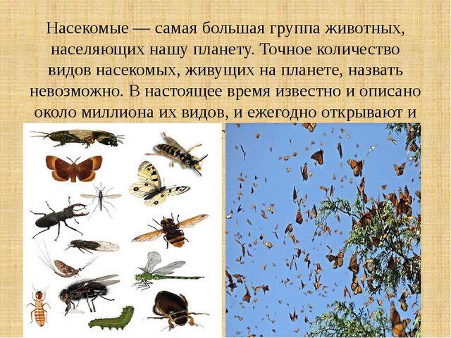 Насекомые — самая большая группа животных, населяющих нашу планету. Точное ко...