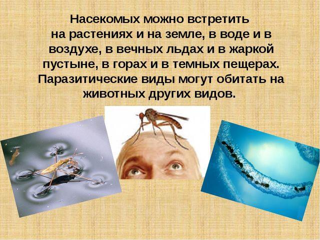 Насекомых можно встретить на растениях и на земле, в воде и в воздухе, в вечн...