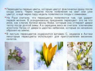 Первоцветы-первые цветы, которые цветут фактически сразу после схода снега. Ч