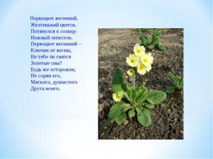 Первоцвет весенний, Желтенький цветок. Потянулся к солнцу Нежный лепесток. П