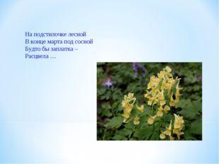 На подстилочке лесной В конце марта под сосной Будто бы заплатка – Расцвела …