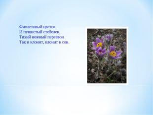 Фиолетовый цветок И пушистый стебелек. Тихий нежный перезвон Так и клонит, кл